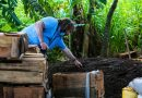 Baurs share short term solutions for Sri Lanka's organic agriculture conversion