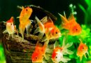 EDB Advisory Committee on Ornamental Fish Exports inaugurated